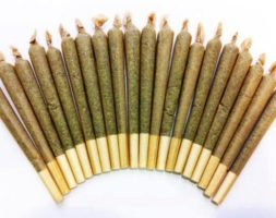 Rolled Joints – Indica (10 Pack)